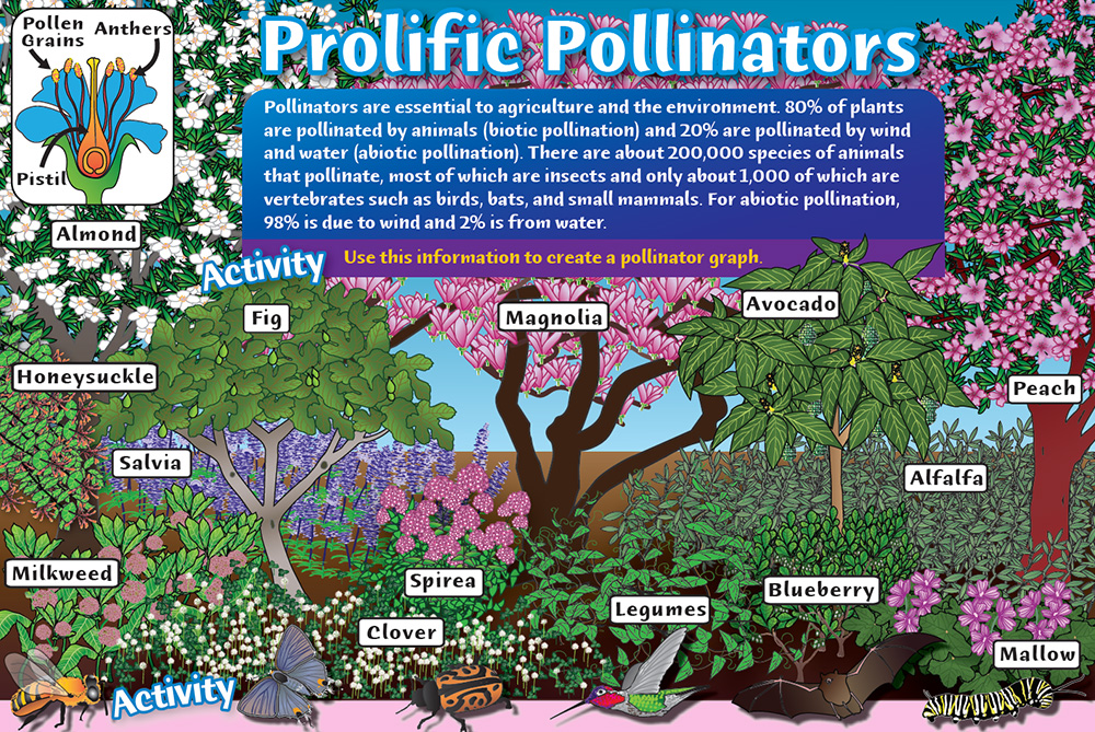 Prolific Pollinators